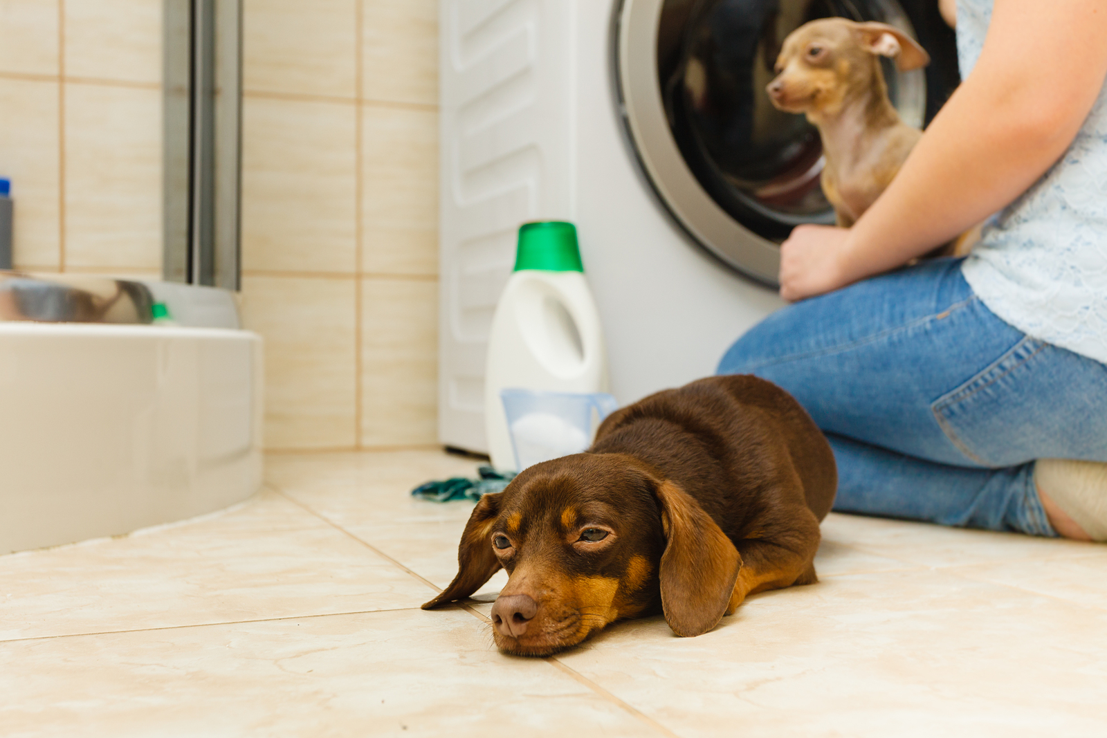 5 Common Ways Dogs Are Accidentally Poisoned