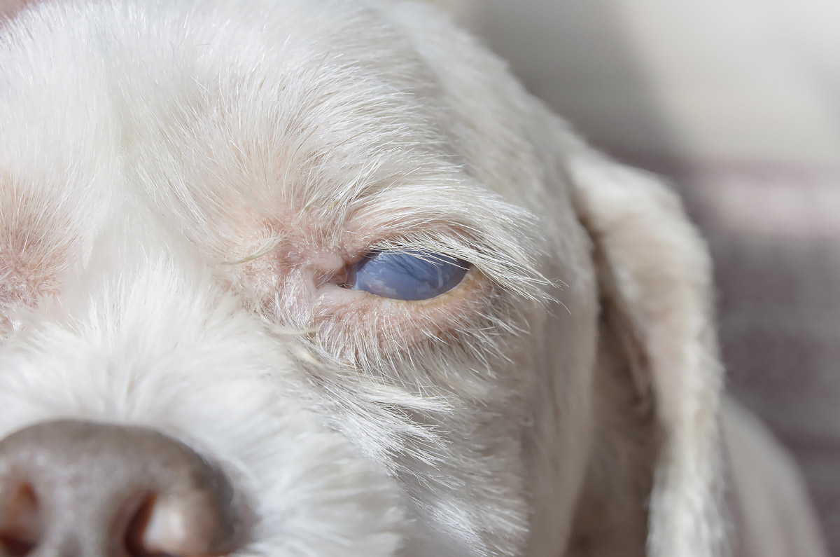 Does Your Dog or Cat Have Diabetes_ Symptoms & Preventive Measures