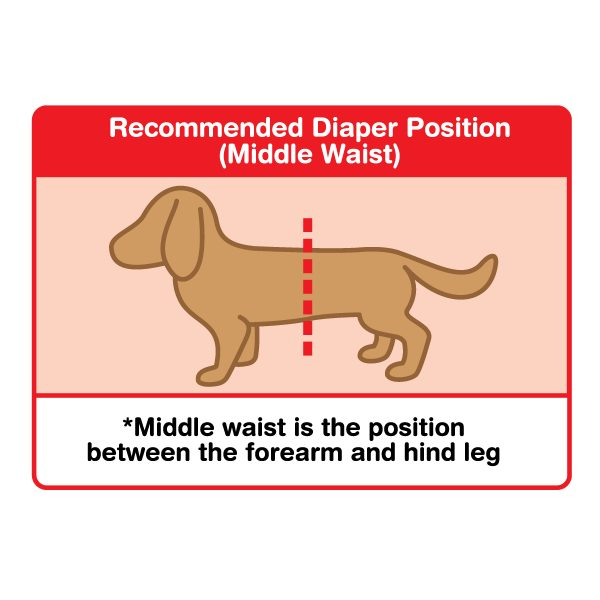 Unicharm Manner Wear Dog Diaper (Female) - Usage Directions2